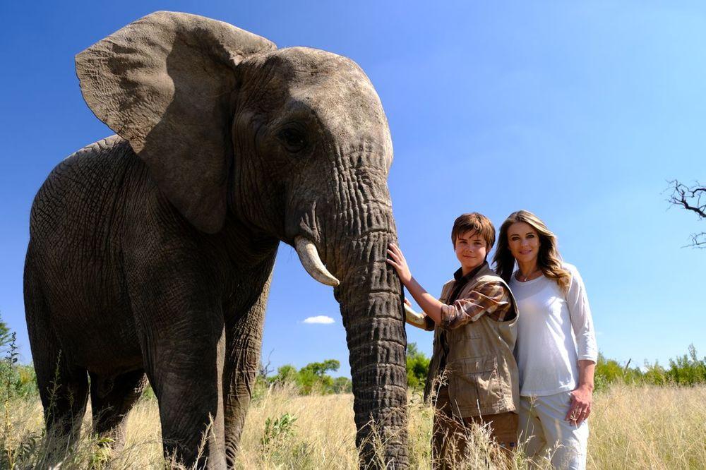 Il ragazzo e il grande elefante attori