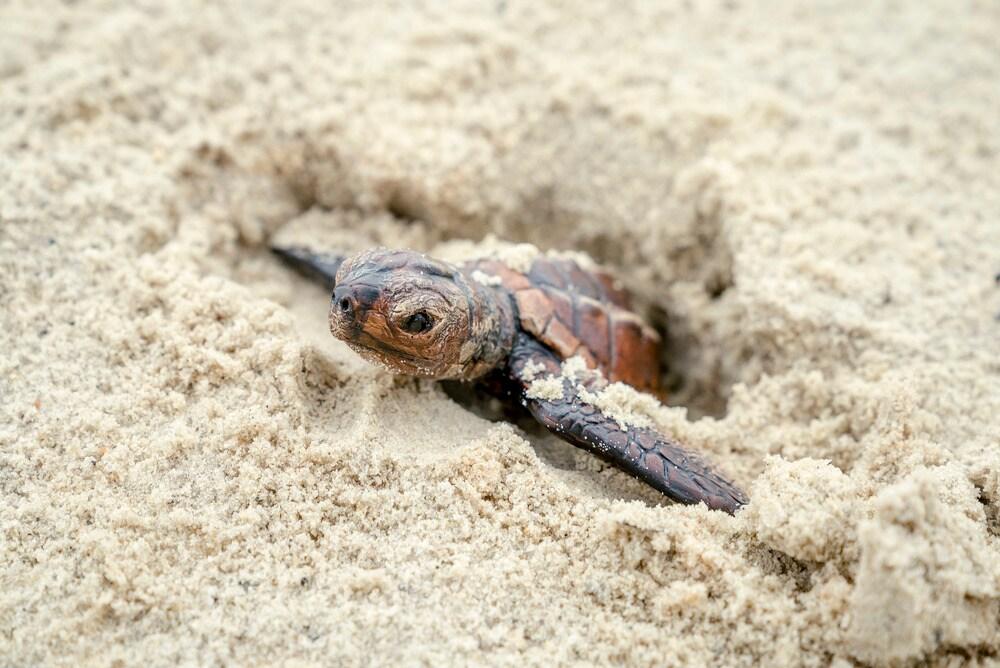 La casa dei miei ricordi tartarughe