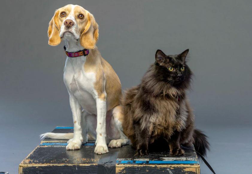 Amarsi come cani e gatti attori