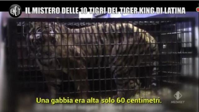 Le Iene Show tigre