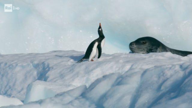 Superquark diretta 15 luglio, lo scioglimento dell'Antartide