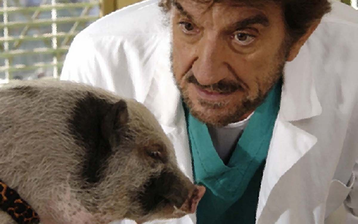 Il veterinario film attori