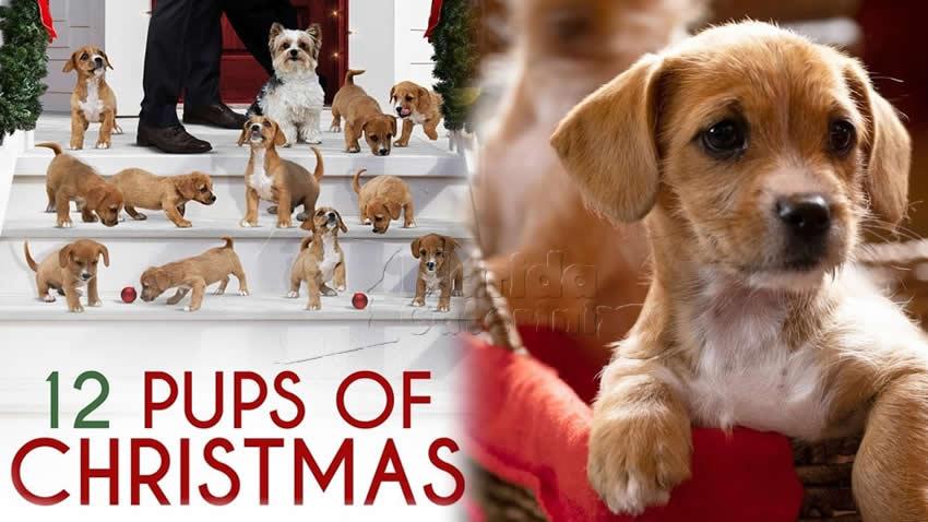 Il Natale dei cuccioli film Tv8