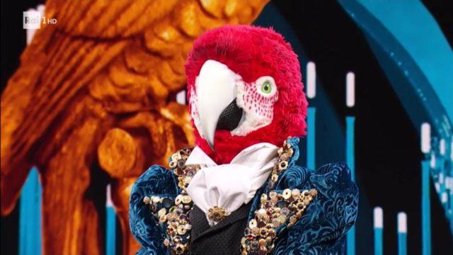 il cantante pappagallo