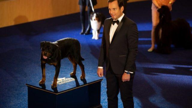 show dogs entriamo in scena film mostra