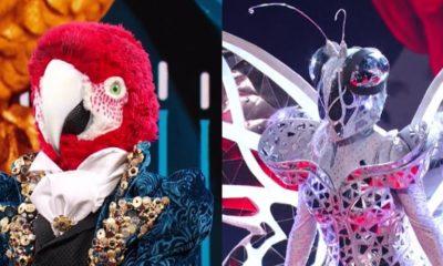 il cantante mascherato pappagallo farfalla copertina