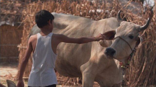 Il vegetariano film dove è girato
