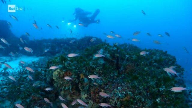 Linea Blu 15 maggio mare Ponza