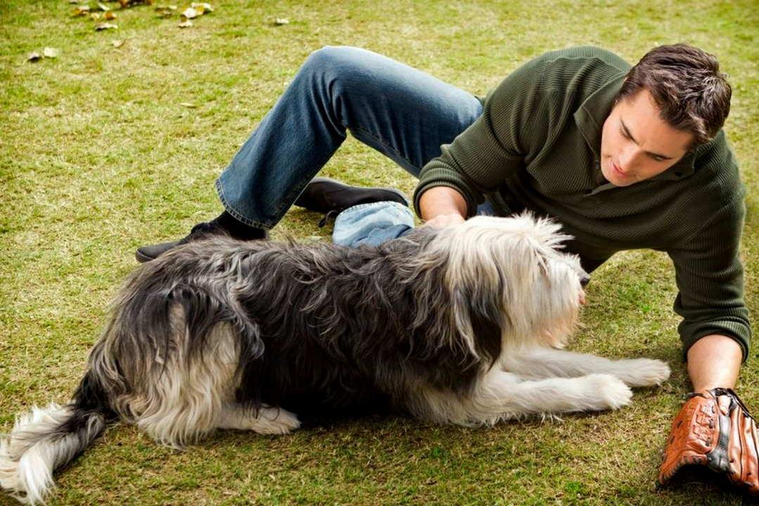 Un cucciolo per due film attori